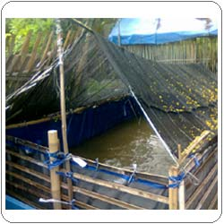 Paranet Untuk Peneduh Kolam Ikan